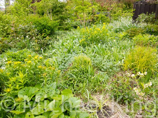Perennial meadow planting