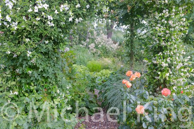 Green Perennial Border