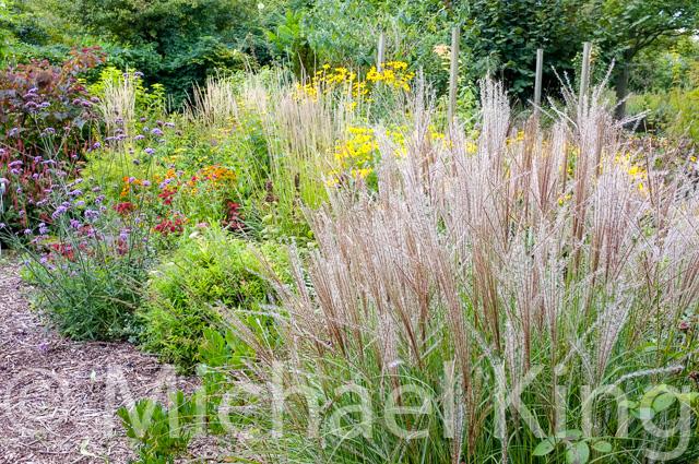 naturalistic planting ornamental Grasses