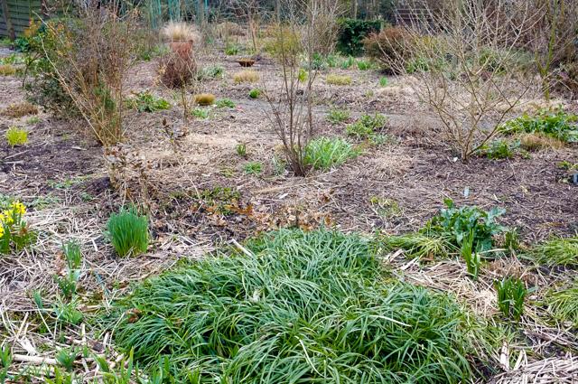 Perennial mulch