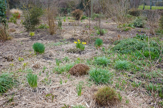 Perennials are cut down in late winter