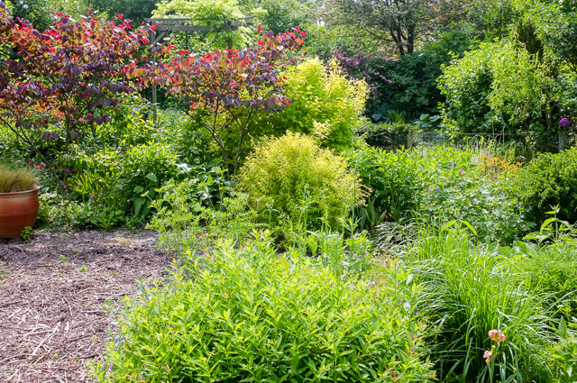 Shrub feature borders