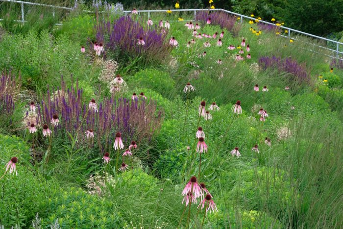 Pictorial perennial meadow