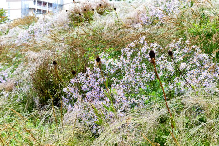 wet Ornamental Grasses