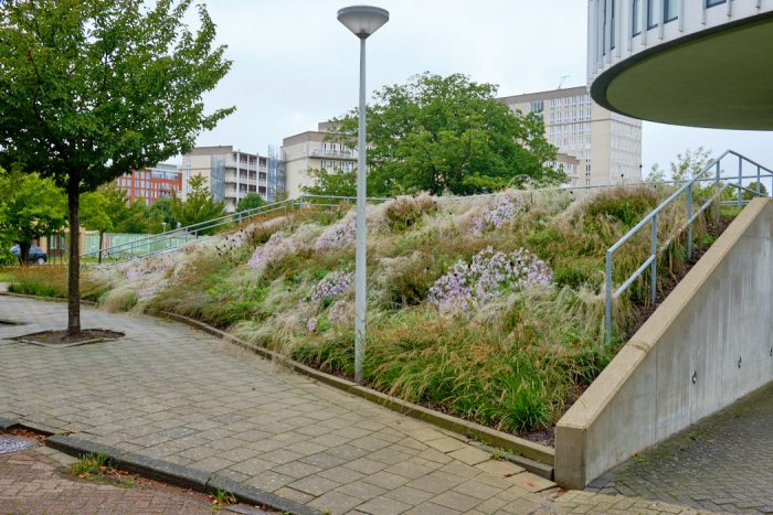 Perennial Meadow planting scheme