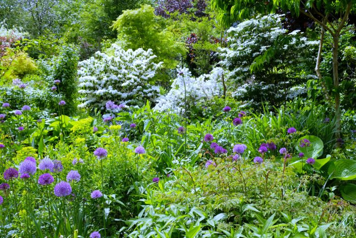 Viburnum and Deutzia
