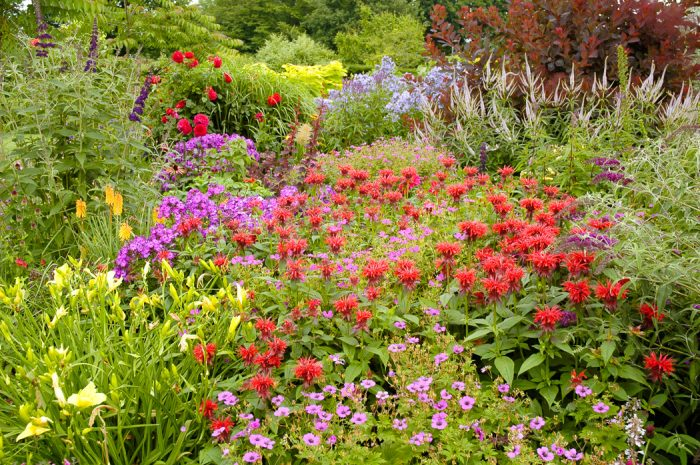 traditional perennial border