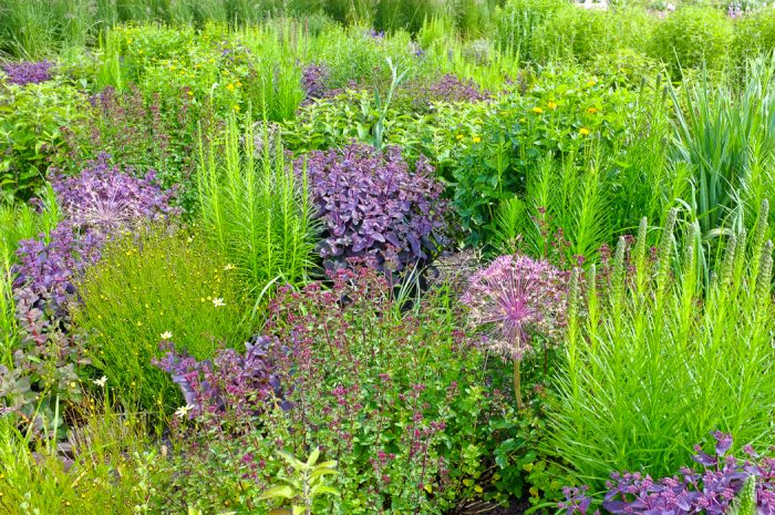 naturalistic perennial meadow, bulbs, perennials, grasses