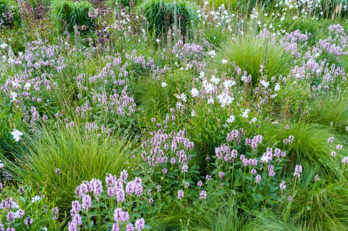 Pictorial perennial meadow