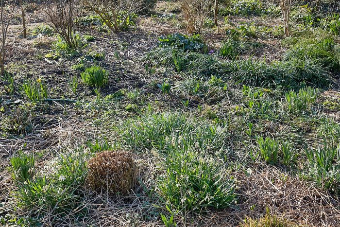 Perennial meadow mown at the end of winter